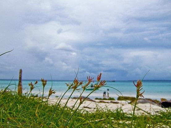 plants along shore, bantayan shoreline, santa fe beach cebu, background photo