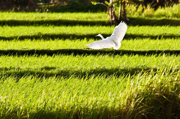 bird, flight, time, field, green grass, time flies