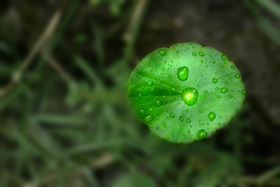 leaf, green, morning, dew, moisture