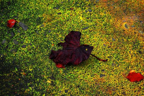 last leaf, leaf, hope, autumn, fall