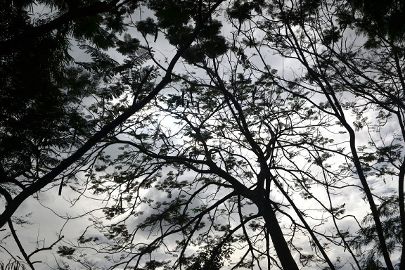 gray sky, leaves, twilight, late afternoon sky