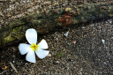 Some flowers that have fallen to the ground are still worth picking.