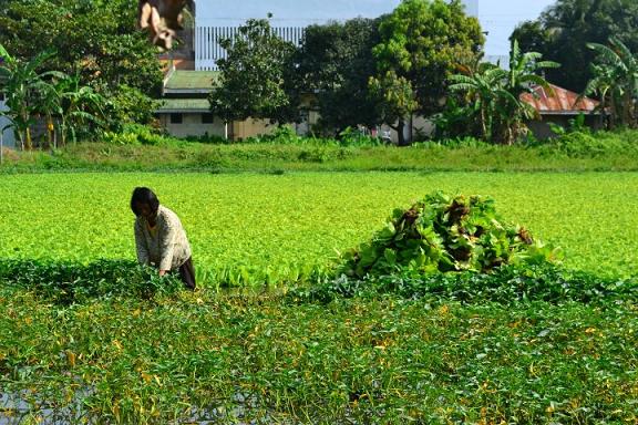 green, farming, farmer, farm, greener pastures, grass is greener