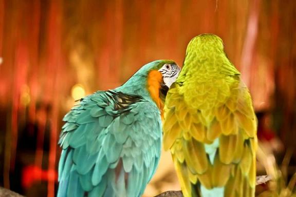 lovebirds at wedding,background images